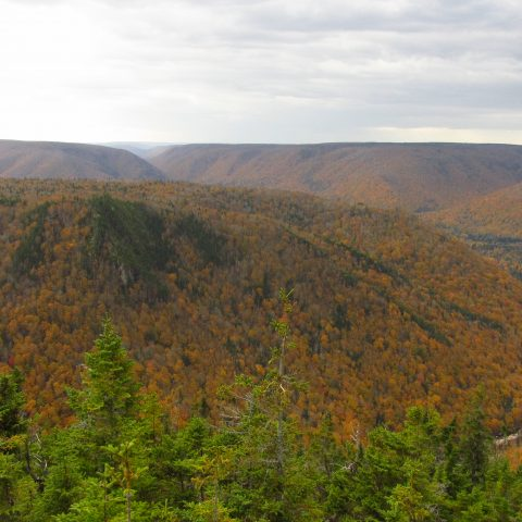 The forests of Margaree as seen from Cape Clear in the highlands of Cape Breton.